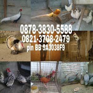 wpid-wp-1440866580941.jpeg