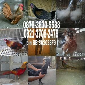 wpid-wp-1440866627279.jpeg